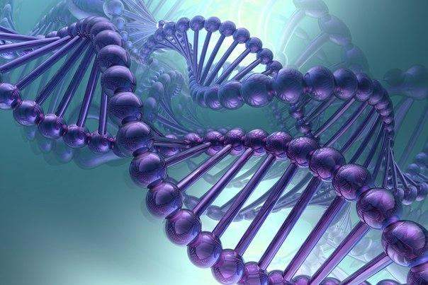 ДНК против мифа эволюции
