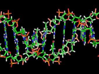 Чудо-молекула ДНК
