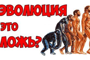 Почему теория эволюции?