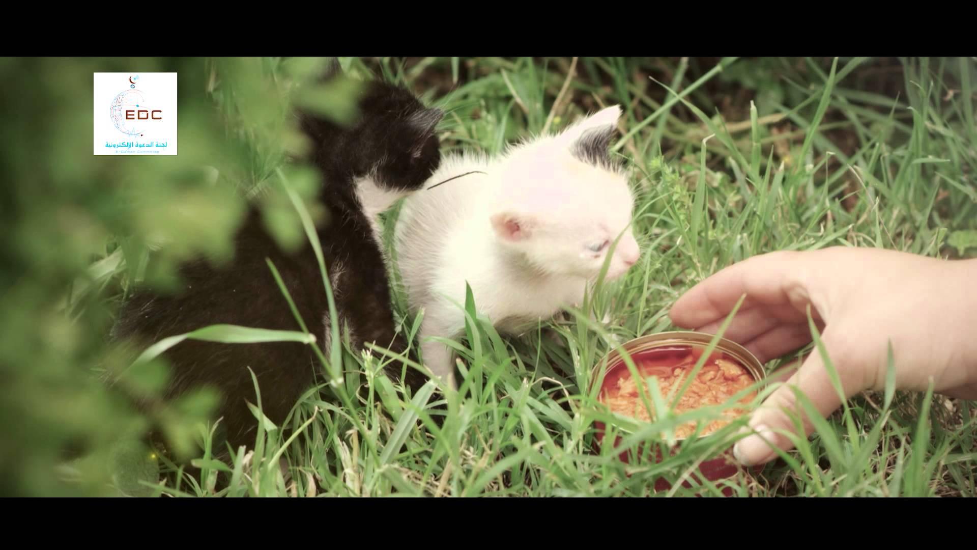 Доброта к животным