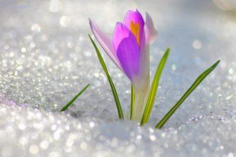 Природа – создание Бога (2)